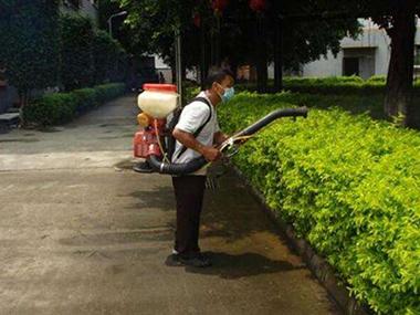 绿化带白蚁防治