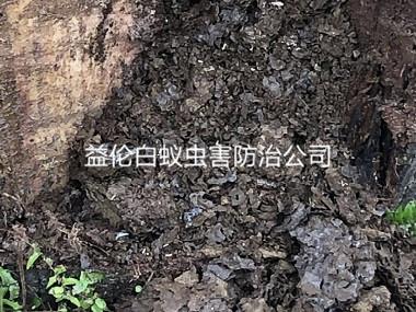 花都工厂库房防治白蚁巢