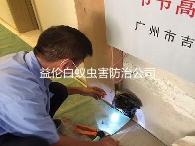 广州企业灭白蚁工程