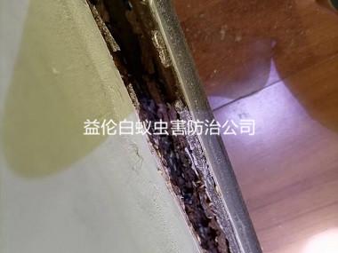 海珠区住宅天花板白蚁防治