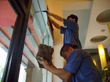 南海区松岗餐厅内取出白蚁巢