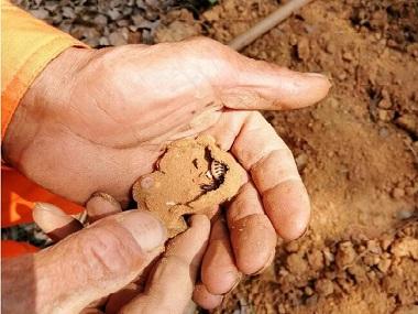 桂城千灯湖公园挖出黄胸散白蚁