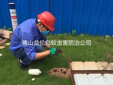 三水红火蚁防治工程