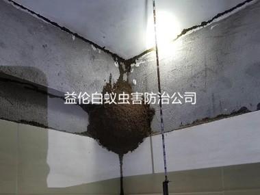 嘉禾房屋白蚁防治工程