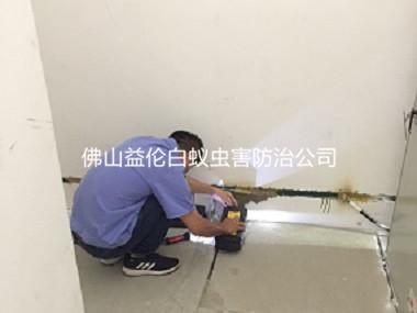 三水房屋勘查防治白蚁工程