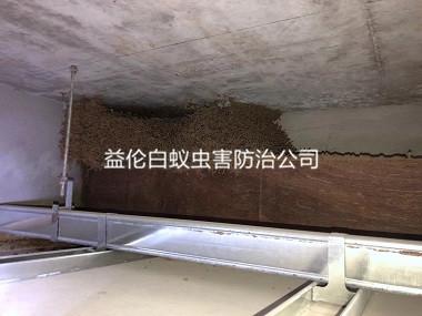 荔湾区旧房屋灭治白蚁巢工程