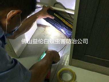 高明小区白蚁防治工程