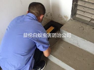 广州仓库灭白蚁工程
