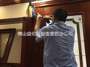 高明碧桂园凤凰城酒店白蚁防治