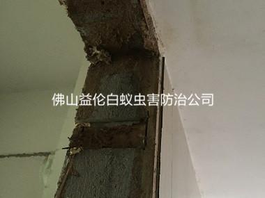 和顺白蚁防治新房屋门框蚁害