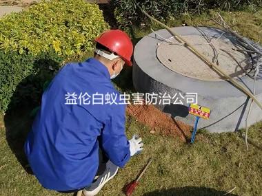 广州小区绿化地灭杀红火蚁