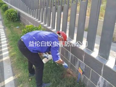 芳村小区环境消杀红火蚁